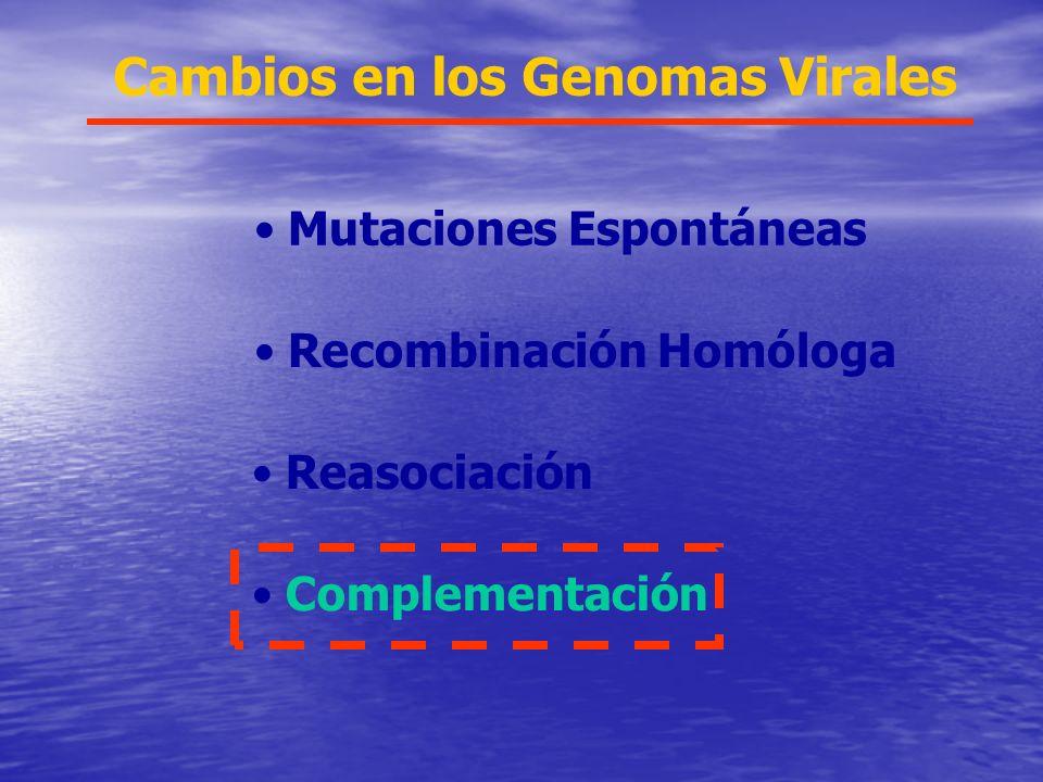 Cambios en los Genomas Virales Mutaciones Espontáneas Recombinación Homóloga Reasociación Complementación
