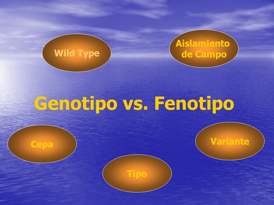 Genotipo vs. Fenotipo Wild Type Aislamiento de Campo Cepa Tipo Variante