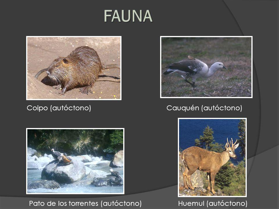FAUNA Coipo (autóctono) Cauquén (autóctono) Pato de los torrentes (autóctono) Huemul (autóctono)