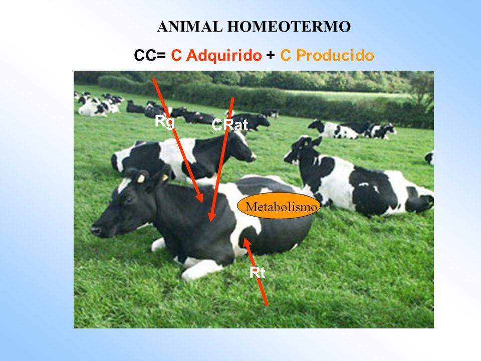 ANIMAL HOMEOTERMO CC= C Adquirido + C Producido Rg Rt CRat Metabolismo