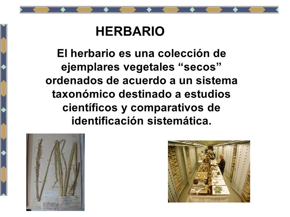 HERBARIO El herbario es una colección de ejemplares vegetales secos ordenados de acuerdo a un sistema taxonómico destinado a estudios científicos y co