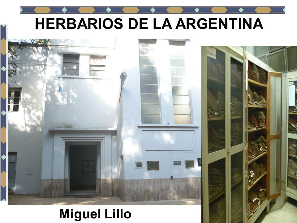 HERBARIOS DE LA ARGENTINA Miguel Lillo