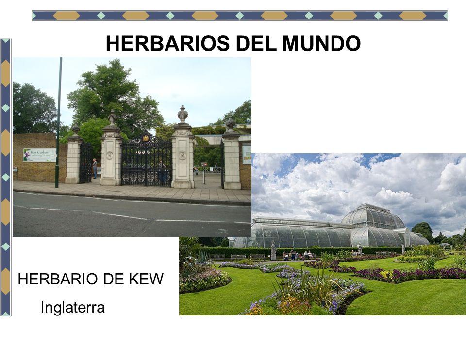 HERBARIOS DEL MUNDO HERBARIO DE KEW Inglaterra