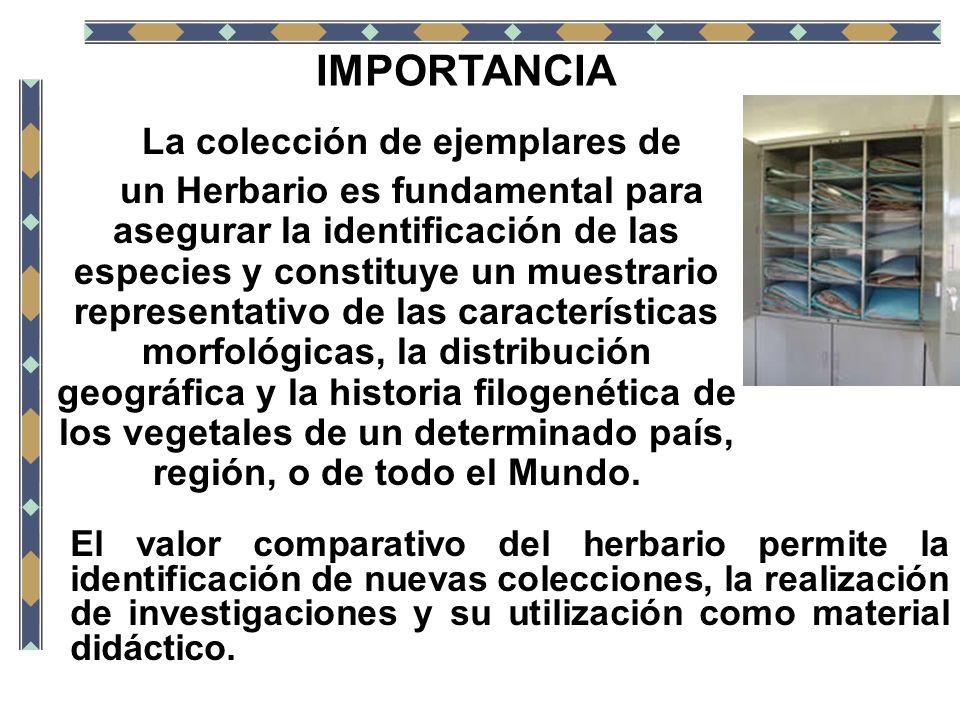 IMPORTANCIA La colección de ejemplares de un Herbario es fundamental para asegurar la identificación de las especies y constituye un muestrario repres