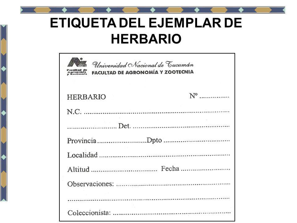 ETIQUETA DEL EJEMPLAR DE HERBARIO