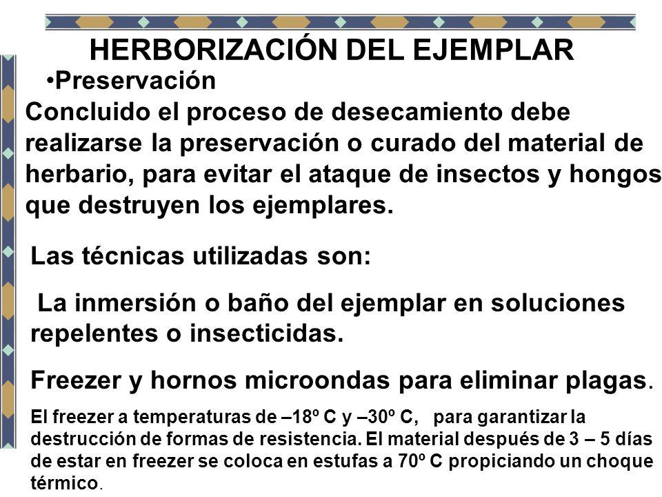 HERBORIZACIÓN DEL EJEMPLAR Preservación Concluido el proceso de desecamiento debe realizarse la preservación o curado del material de herbario, para e