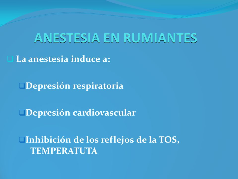 ANESTESIA EN RUMIANTES La anestesia induce a: Depresión respiratoria Depresión cardiovascular Inhibición de los reflejos de la TOS, TEMPERATUTA