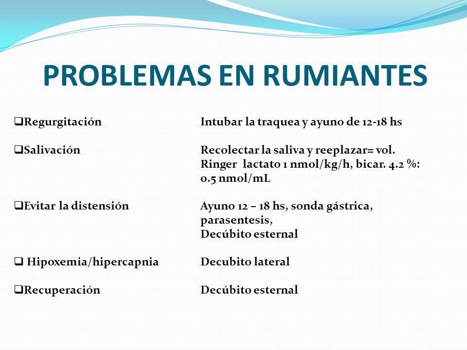PROBLEMAS EN RUMIANTES RegurgitaciónIntubar la traquea y ayuno de 12-18 hs SalivaciónRecolectar la saliva y reeplazar= vol. Ringer lactato 1 nmol/kg/h