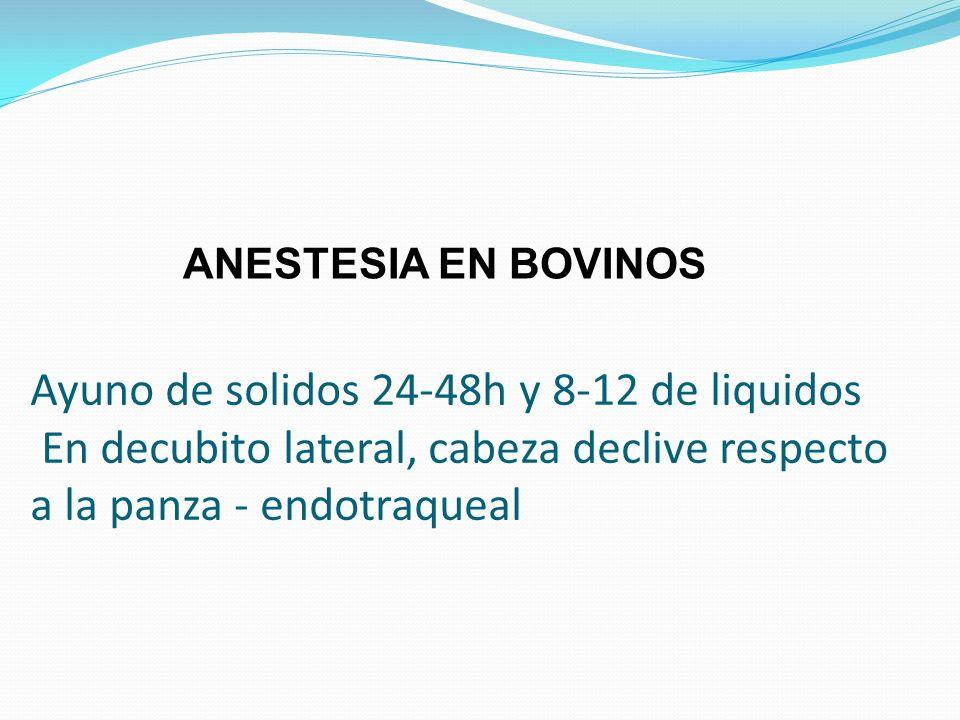 Ayuno de solidos 24-48h y 8-12 de liquidos En decubito lateral, cabeza declive respecto a la panza - endotraqueal ANESTESIA EN BOVINOS