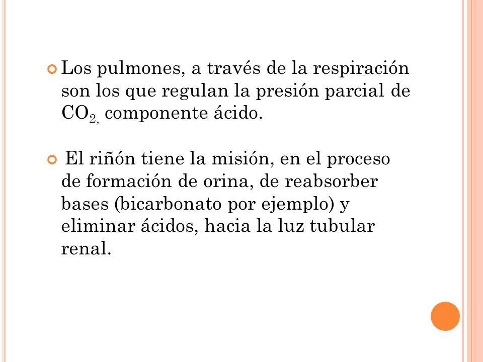 Los pulmones, a través de la respiración son los que regulan la presión parcial de CO 2, componente ácido. El riñón tiene la misión, en el proceso de