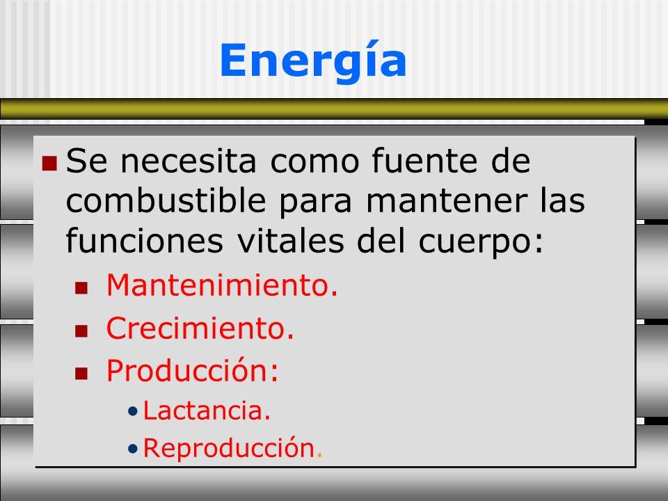 Energía Se necesita como fuente de combustible para mantener las funciones vitales del cuerpo: Mantenimiento. Crecimiento. Producción: Lactancia. Repr
