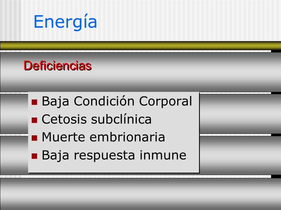 Energía Baja Condición Corporal Cetosis subclínica Muerte embrionaria Baja respuesta inmune Baja Condición Corporal Cetosis subclínica Muerte embriona
