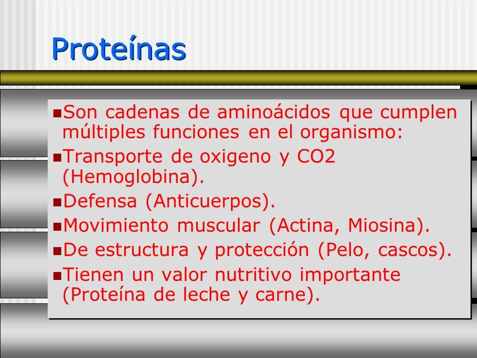 Son cadenas de aminoácidos que cumplen múltiples funciones en el organismo: Transporte de oxigeno y CO2 (Hemoglobina). Defensa (Anticuerpos). Movimien