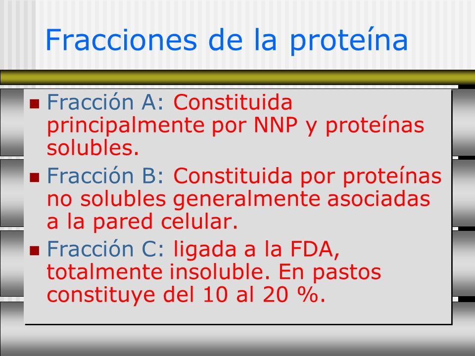Fracciones de la proteína Fracción A: Constituida principalmente por NNP y proteínas solubles. Fracción B: Constituida por proteínas no solubles gener