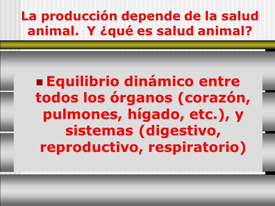La producción depende de la salud animal. Y ¿qué es salud animal? Equilibrio dinámico entre todos los órganos (corazón, pulmones, hígado, etc.), y sis