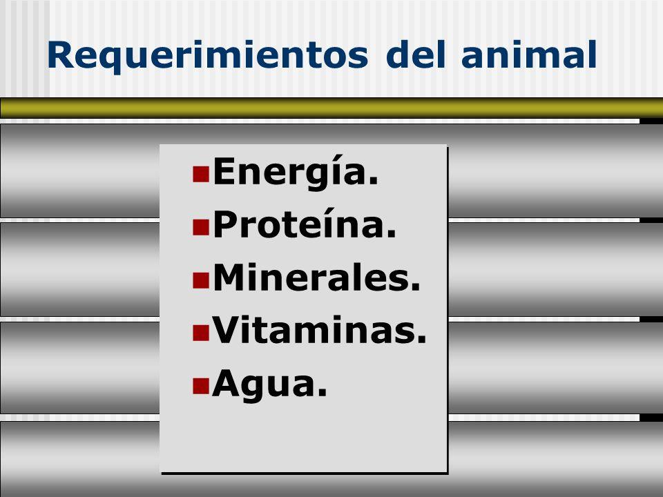 Requerimientos del animal Energía. Proteína. Minerales. Vitaminas. Agua. Energía. Proteína. Minerales. Vitaminas. Agua.
