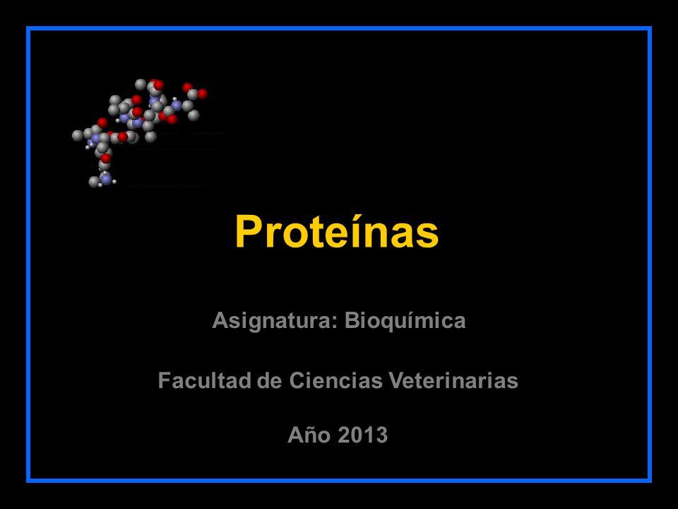 Proteínas Facultad de Ciencias Veterinarias Año 2013 Asignatura: Bioquímica