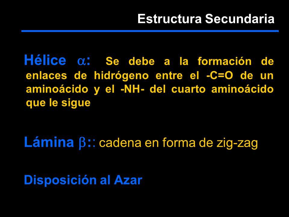 Hélice :: Se debe a la formación de enlaces de hidrógeno entre el -C=O de un aminoácido y el -NH- del cuarto aminoácido que le sigue Lámina :: cadena en forma de zig-zag Disposición al Azar Estructura Secundaria