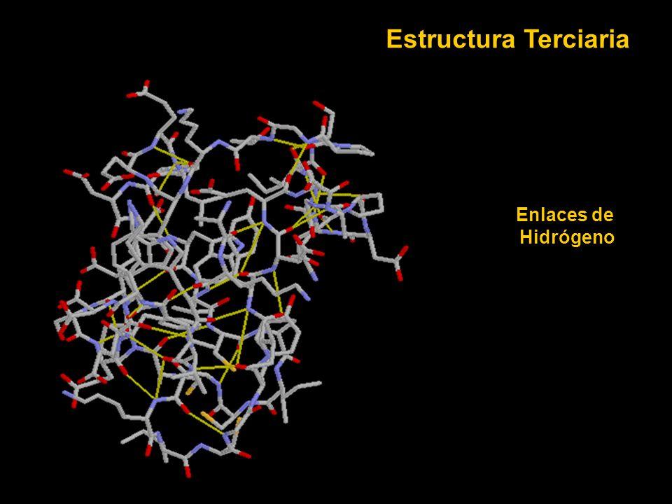 Enlaces de Hidrógeno Estructura Terciaria