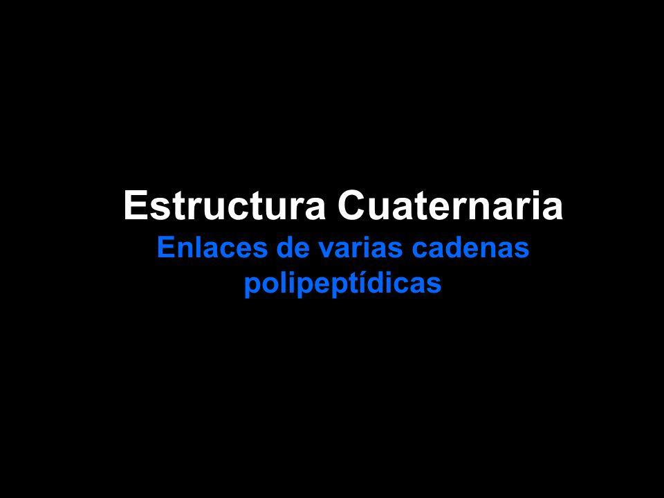 Estructura Cuaternaria Enlaces de varias cadenas polipeptídicas