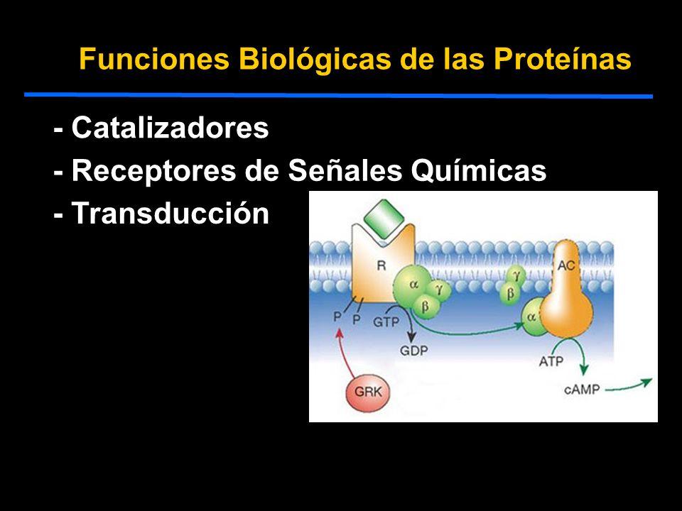 Funciones Biológicas de las Proteínas - Catalizadores - Receptores de Señales Químicas - Estructurales - Defensa - Motilidad - Transducción