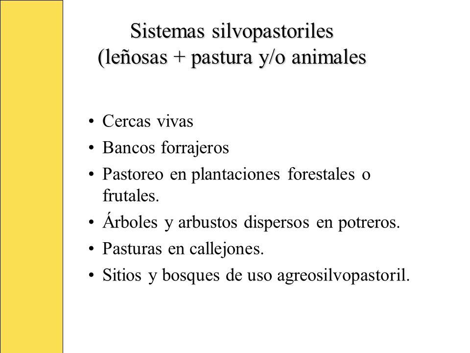 Sistemas silvopastoriles (leñosas + pastura y/o animales Cercas vivas Bancos forrajeros Pastoreo en plantaciones forestales o frutales. Árboles y arbu