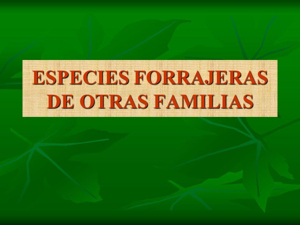 ESPECIES FORRAJERAS DE OTRAS FAMILIAS