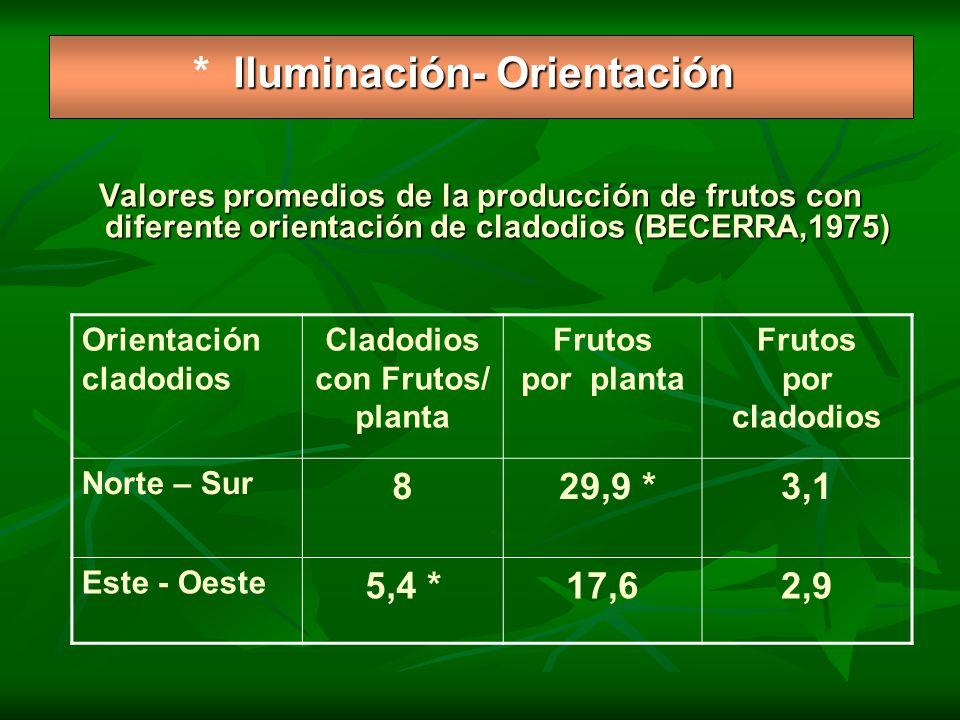Iluminación- Orientación * Iluminación- Orientación Valores promedios de la producción de frutos con diferente orientación de cladodios (BECERRA,1975)