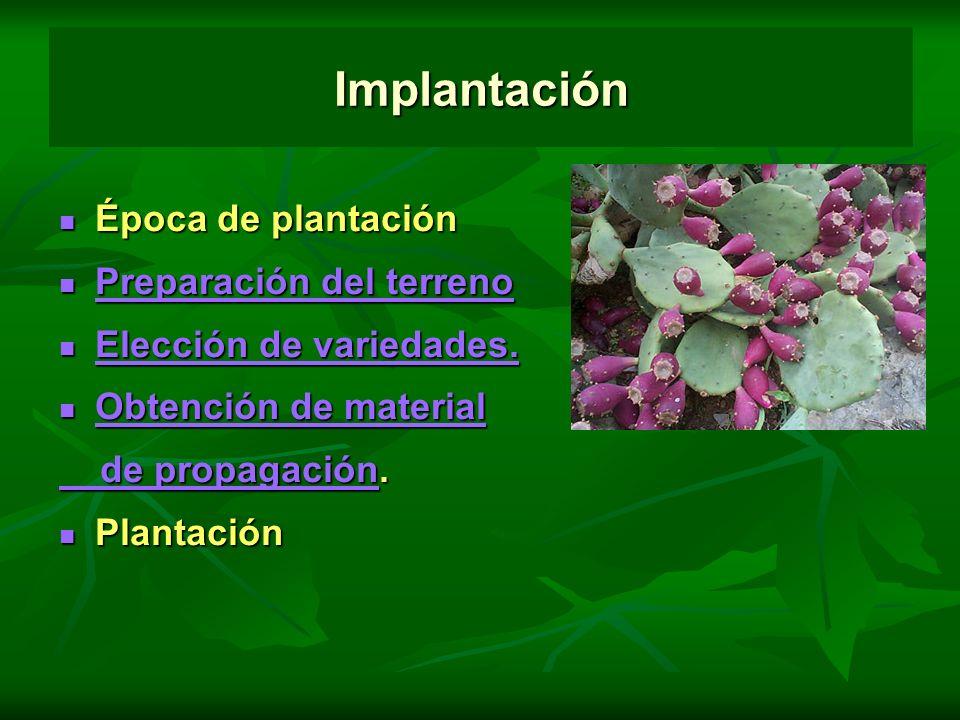 Implantación Época de plantación Época de plantación Preparación del terreno Preparación del terreno Preparación del terreno Preparación del terreno E
