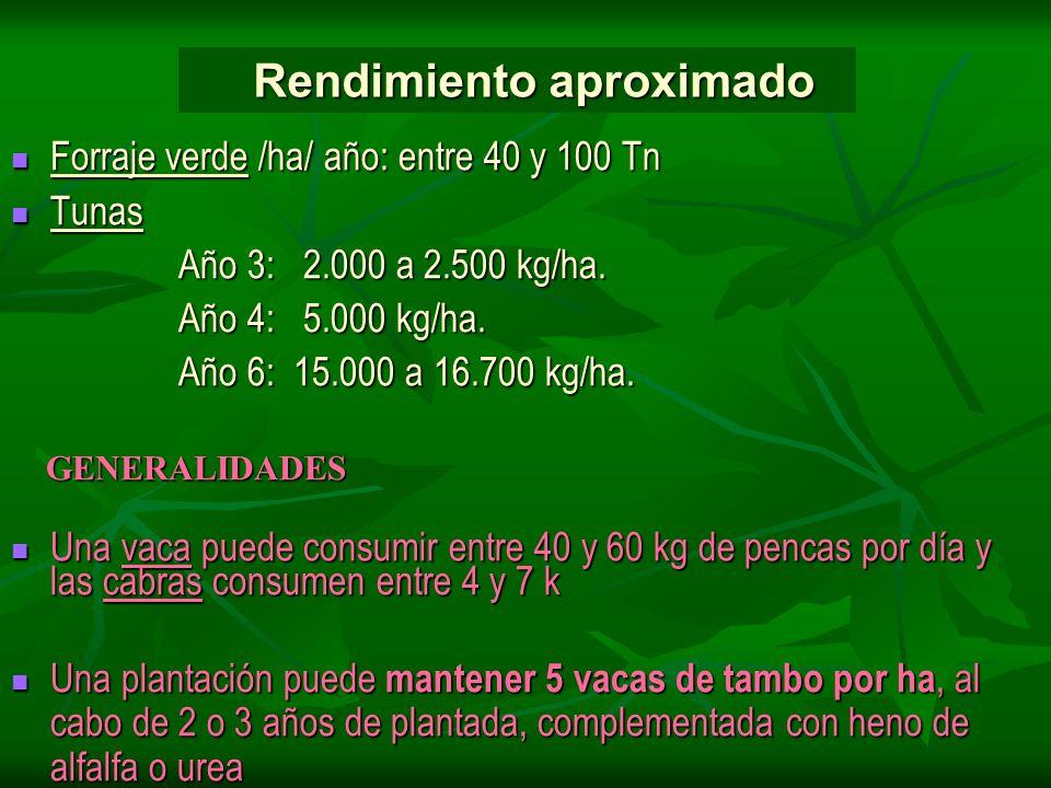Forraje verde /ha/ año: entre 40 y 100 Tn Forraje verde /ha/ año: entre 40 y 100 Tn Tunas Tunas Año 3: 2.000 a 2.500 kg/ha. Año 3: 2.000 a 2.500 kg/ha