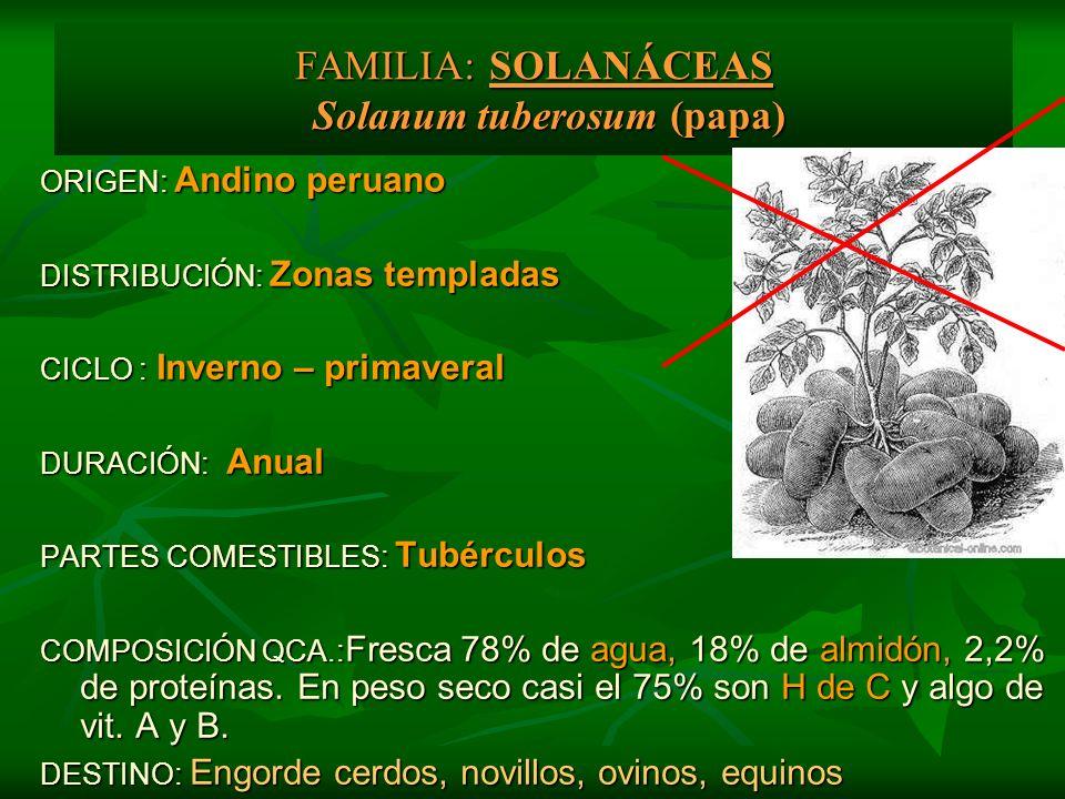 ORIGEN: Andino peruano DISTRIBUCIÓN: Zonas templadas CICLO : Inverno – primaveral DURACIÓN: Anual PARTES COMESTIBLES: Tubérculos COMPOSICIÓN QCA.: Fre