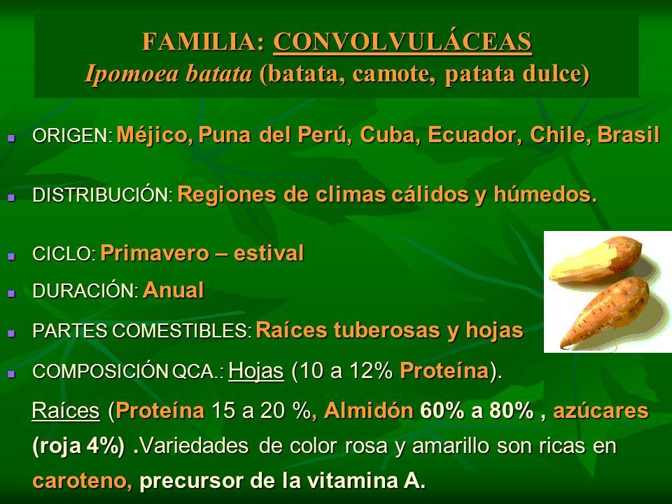 FAMILIA: CONVOLVULÁCEAS Ipomoea batata (batata, camote, patata dulce) ORIGEN: Méjico, Puna del Perú, Cuba, Ecuador, Chile, Brasil ORIGEN: Méjico, Puna