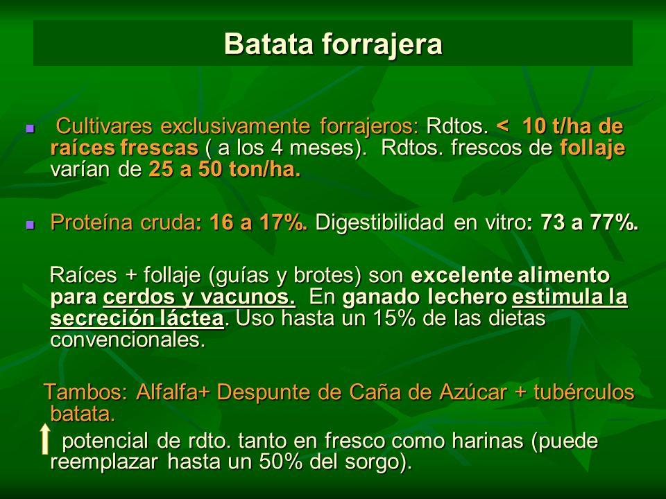 Batata forrajera Cultivares exclusivamente forrajeros: Rdtos. < 10 t/ha de raíces frescas ( a los 4 meses). Rdtos. frescos de follaje varían de 25 a 5