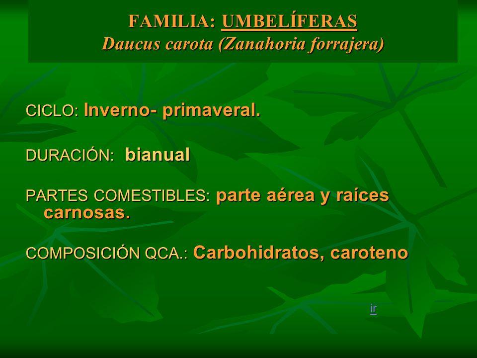 FAMILIA: UMBELÍFERAS Daucus carota (Zanahoria forrajera) CICLO: Inverno- primaveral. DURACIÓN: bianual PARTES COMESTIBLES: parte aérea y raíces carnos