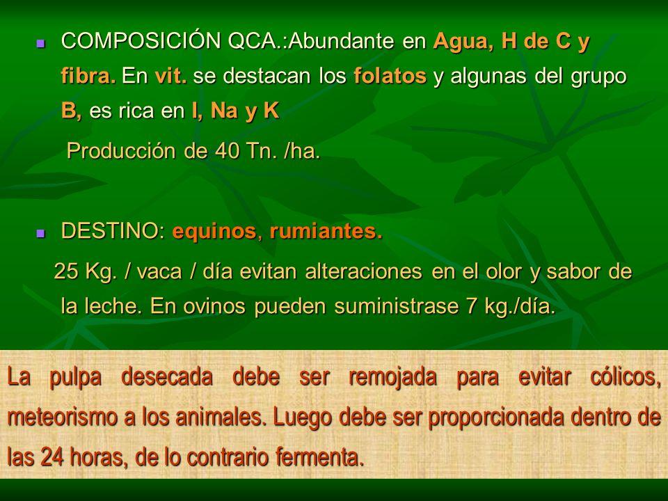 COMPOSICIÓN QCA.:Abundante en Agua, H de C y fibra. En vit. se destacan los folatos y algunas del grupo B, es rica en I, Na y K COMPOSICIÓN QCA.:Abund