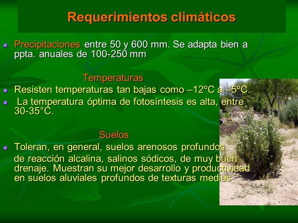 Precipitaciones entre 50 y 600 mm. Se adapta bien a ppta. anuales de 100-250 mm Precipitaciones entre 50 y 600 mm. Se adapta bien a ppta. anuales de 1