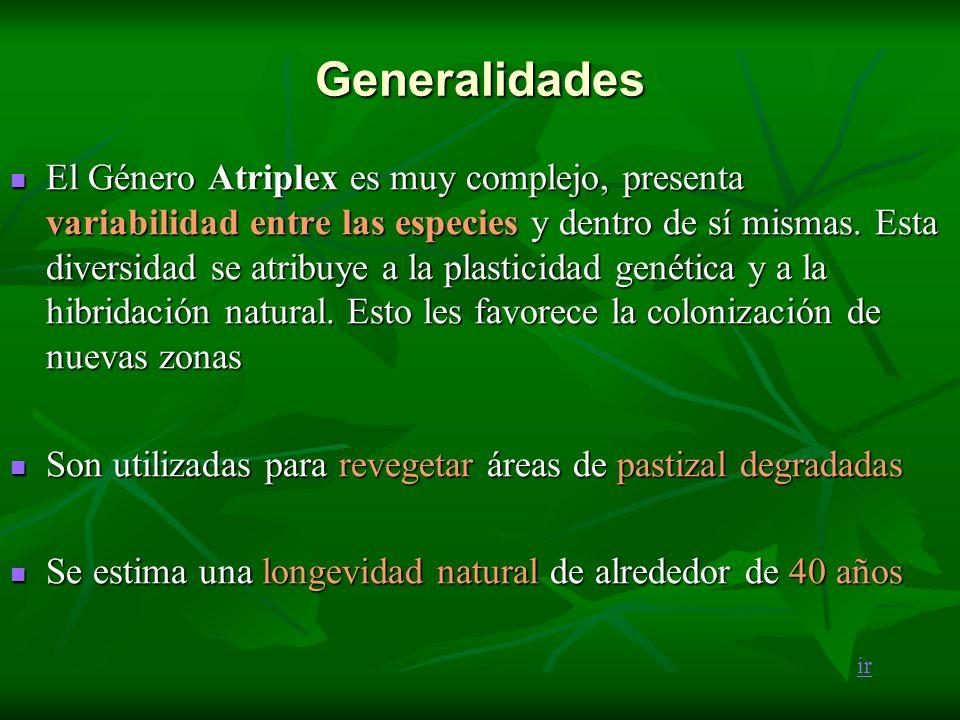 Generalidades El Género Atriplex es muy complejo, presenta variabilidad entre las especies y dentro de sí mismas. Esta diversidad se atribuye a la pla