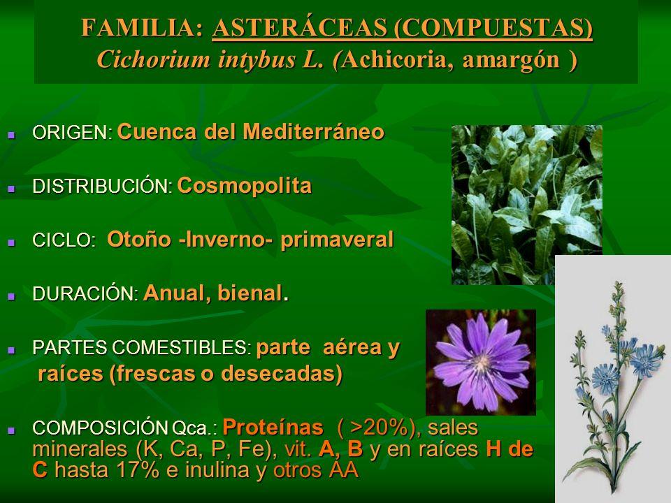 FAMILIA: ASTERÁCEAS (COMPUESTAS) Cichorium intybus L. (Achicoria, amargón ) ORIGEN: Cuenca del Mediterráneo ORIGEN: Cuenca del Mediterráneo DISTRIBUCI