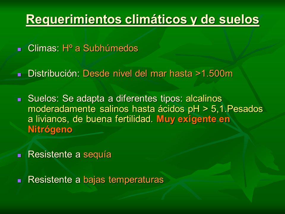 Requerimientos climáticos y de suelos Climas: Hº a Subhúmedos Climas: Hº a Subhúmedos Distribución: Desde nivel del mar hasta >1.500m Distribución: De