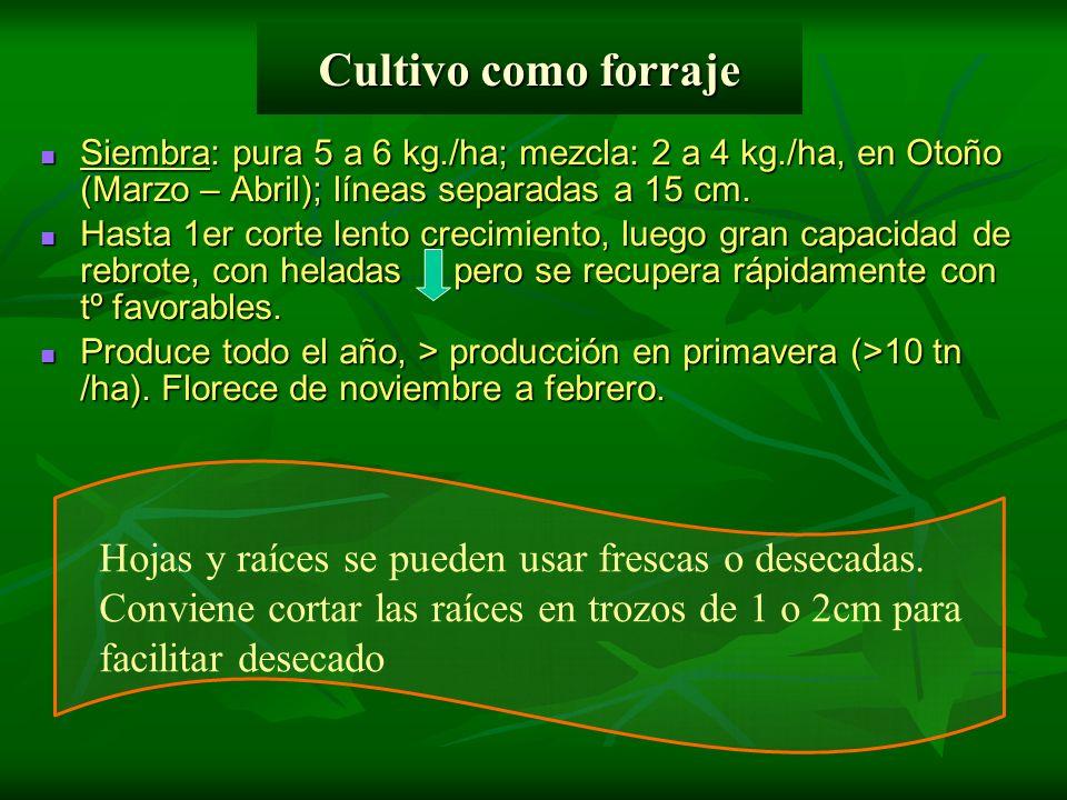 Cultivo como forraje Siembra: pura 5 a 6 kg./ha; mezcla: 2 a 4 kg./ha, en Otoño (Marzo – Abril); líneas separadas a 15 cm. Siembra: pura 5 a 6 kg./ha;