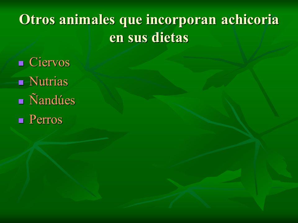 Otros animales que incorporan achicoria en sus dietas Ciervos Ciervos Nutrias Nutrias Ñandúes Ñandúes Perros Perros