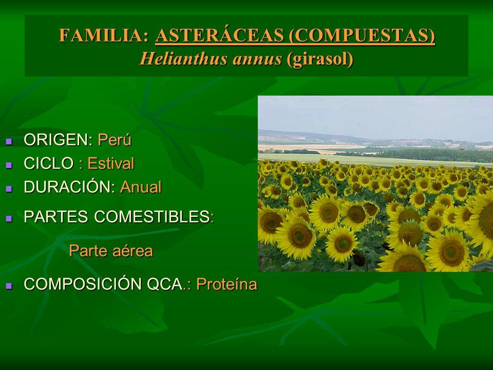 FAMILIA: ASTERÁCEAS (COMPUESTAS) Helianthus annus (girasol) ORIGEN: Perú ORIGEN: Perú CICLO : Estival CICLO : Estival DURACIÓN: Anual DURACIÓN: Anual