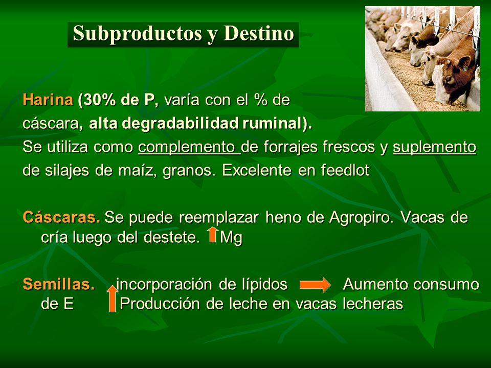 Harina (30% de P, varía con el % de cáscara, alta degradabilidad ruminal). Se utiliza como complemento de forrajes frescos y suplemento de silajes de