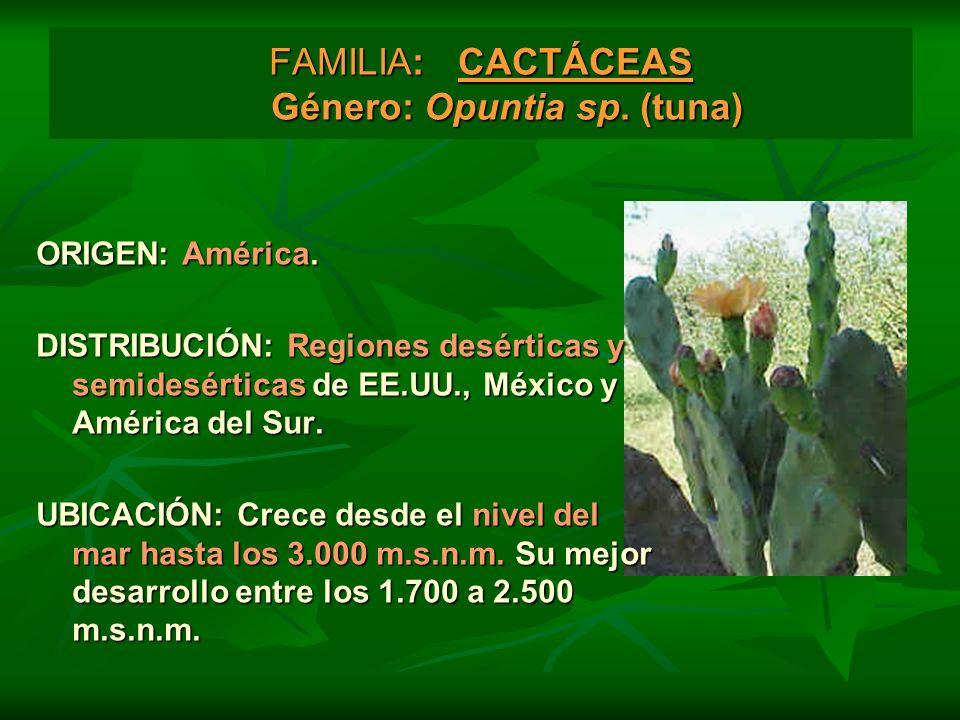 FAMILIA: CACTÁCEAS Género: Opuntia sp. (tuna) ORIGEN: América. DISTRIBUCIÓN: Regiones desérticas y semidesérticas de EE.UU., México y América del Sur.