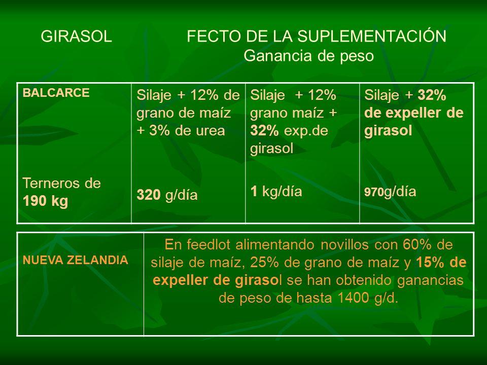 GIRASOL FECTO DE LA SUPLEMENTACIÓN Ganancia de peso BALCARCE Terneros de 190 kg Silaje + 12% de grano de maíz + 3% de urea 320 g/día Silaje + 12% gran