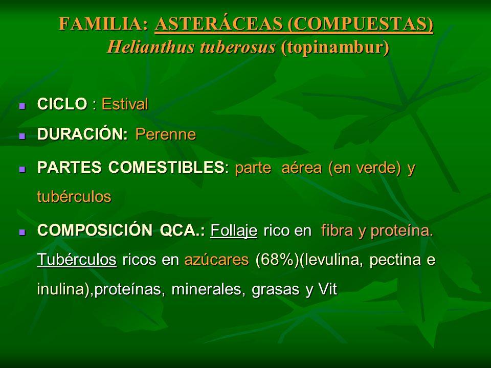 FAMILIA: ASTERÁCEAS (COMPUESTAS) Helianthus tuberosus (topinambur) CICLO : Estival CICLO : Estival DURACIÓN: Perenne DURACIÓN: Perenne PARTES COMESTIB