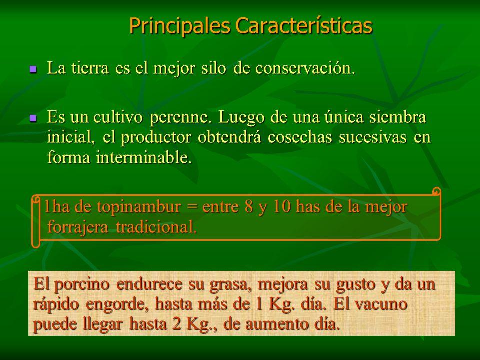 Principales Características Principales Características La tierra es el mejor silo de conservación. La tierra es el mejor silo de conservación. Es un
