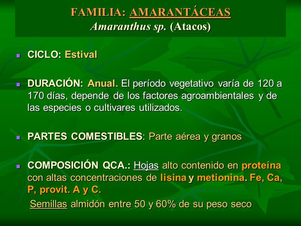FAMILIA: AMARANTÁCEAS Amaranthus sp. (Atacos) CICLO: Estival CICLO: Estival DURACIÓN: Anual. El período vegetativo varía de 120 a 170 días, depende de