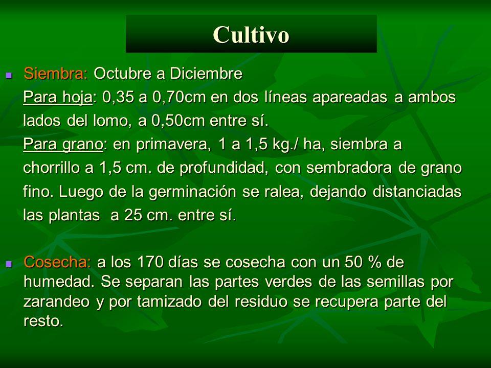 Cultivo Siembra: Octubre a Diciembre Siembra: Octubre a Diciembre Para hoja: 0,35 a 0,70cm en dos líneas apareadas a ambos Para hoja: 0,35 a 0,70cm en