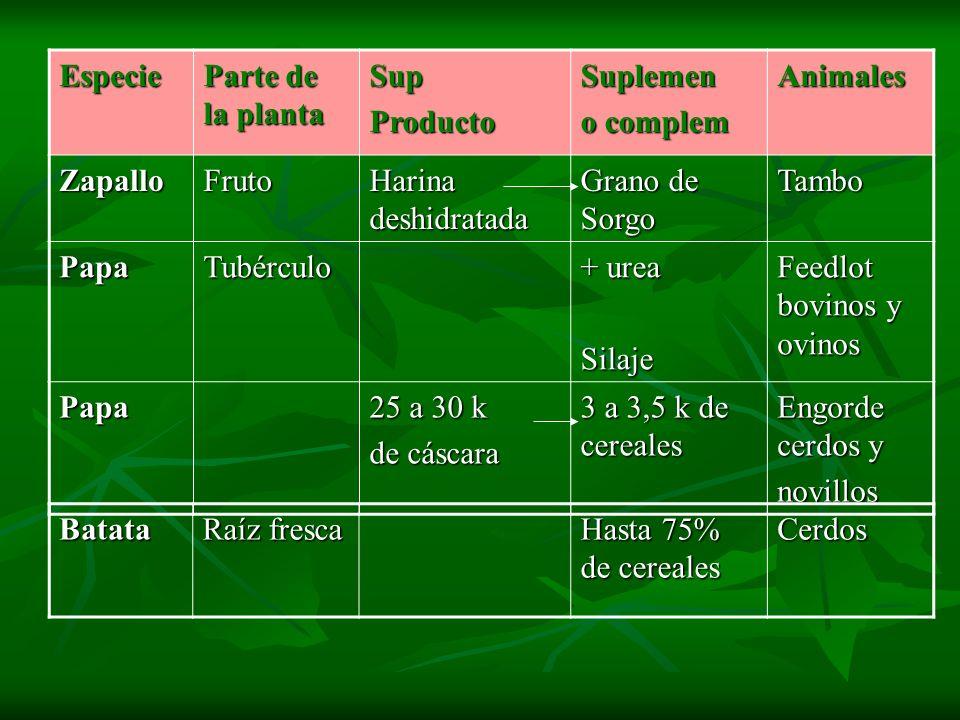 Especie Parte de la planta SupProductoSuplemen o complem Animales ZapalloFruto Harina deshidratada Grano de Sorgo Tambo PapaTubérculo + urea Silaje Fe